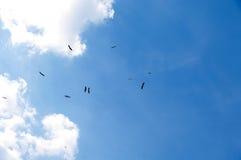 在天空的12只鹳 免版税图库摄影