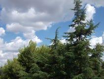 在天空的结构树 免版税库存图片