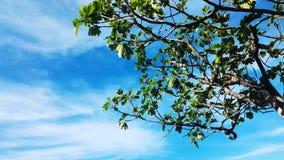 在天空的结构树 免版税图库摄影