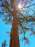 在天空的结构树 免版税库存照片