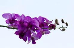在天空的紫色花 免版税库存照片