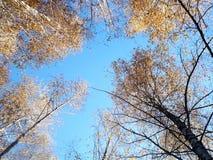 在天空的Autamn 图库摄影