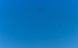 在天空的Parachuters 免版税库存图片