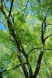 在天空结构树对面的蓝色 图库摄影