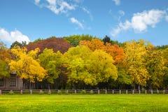 在天空结构树的秋天蓝色 库存图片