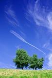 在天空结构树的蓝色 免版税库存图片