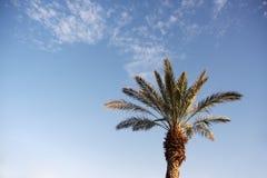 在天空背景前面的枣椰子树 免版税图库摄影