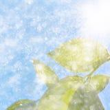 在天空背景的叶子 免版税库存照片