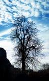 在天空背景的干燥树剪影与鸟坐它 库存照片