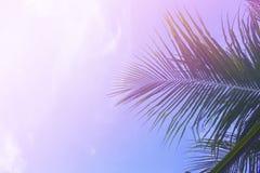在天空背景的棕榈树叶子 在天空的棕榈叶 桃红色和紫色被过滤的照片 图库摄影
