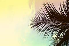 在天空背景的棕榈树叶子 在天空的棕榈叶 绿色和黄色被定调子的照片 图库摄影