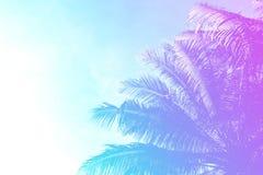 在天空背景的椰子树树 柔和的桃红色和蓝色被定调子的照片 免版税库存照片