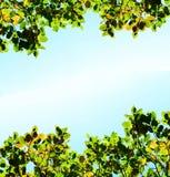 在天空背景的秋天橙色和绿色叶子 库存图片