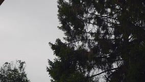 在天空背景的美丽的树 影视素材