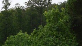 在天空背景的美丽的树 股票录像