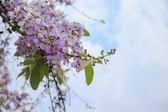 在天空背景的花紫色 免版税库存图片