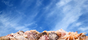 在天空背景的贝壳 免版税库存图片
