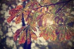 在天空背景的Instagram样式过滤器秋天kashtan叶子 免版税库存照片