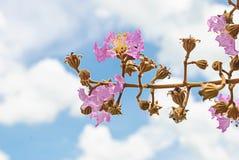 在天空背景隔绝的花 库存图片