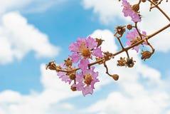 在天空背景隔绝的花 库存照片