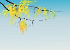 在天空背景,传染媒介例证的黄金雨树 免版税库存照片