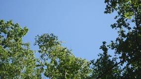 在天空背景,树天空的美丽的树 股票录像