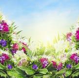 在天空背景,花卉边界的五颜六色的花 库存图片