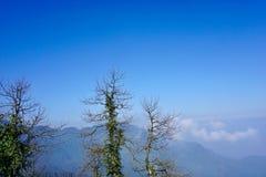 在天空蔚蓝下的山,一些棵死的树围拢绿色藤 图库摄影