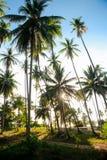 在天空蔚蓝下的椰子树丛 免版税库存照片
