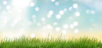 在天空蔚蓝前面的草在背后照明 库存图片