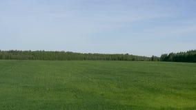在天空蔚蓝背景的绿色草甸领域 股票视频