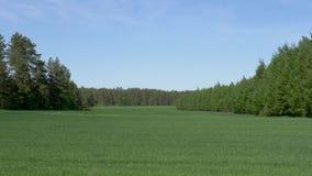 在天空蔚蓝背景的绿色草甸领域 股票录像