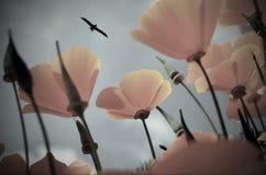 在天空蔚蓝,鸟背景的橙色花  库存图片