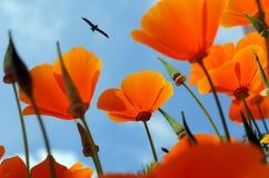 在天空蔚蓝,鸟背景的橙色花  免版税库存照片