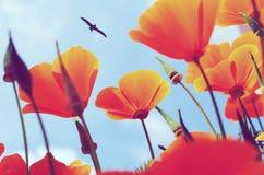 在天空蔚蓝,鸟背景的橙色花  免版税库存图片