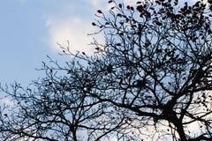 在天空选择聚焦的剪影树 免版税库存照片