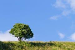 在天空结构树的蓝色 夏天全景 库存照片