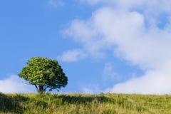 在天空结构树的蓝色 夏天全景 免版税图库摄影