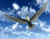 在天空33的老鹰 免版税库存图片