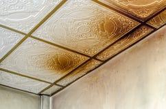 在天花板的危险毒性真菌模子 库存照片