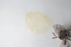 在天花板的污点从雨 免版税库存照片