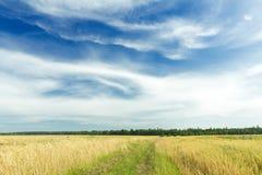 在天蓝色的天空的卷云在黑麦领域和土路上 免版税库存图片