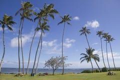 在天际的棕榈 免版税库存照片