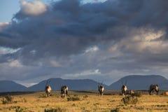 在天际的羚羊 免版税库存图片
