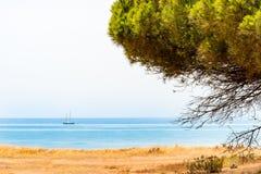 在天际的遥远的船与黄色草和一棵杉树在前景 免版税图库摄影