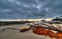 在天际的风暴在拉古纳海滩 免版税库存照片