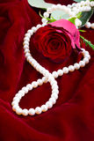 在天鹅绒的红色玫瑰 免版税库存图片