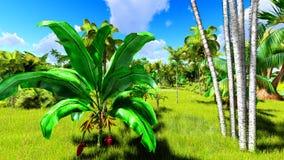 在天3d翻译期间的热带密林 免版税库存图片