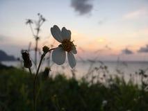 在太平洋上的日落-从Princeville的看法在考艾岛海岛,夏威夷上 库存照片
