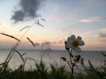 在太平洋上的日落-从Princeville的看法在考艾岛海岛,夏威夷上 免版税库存图片
